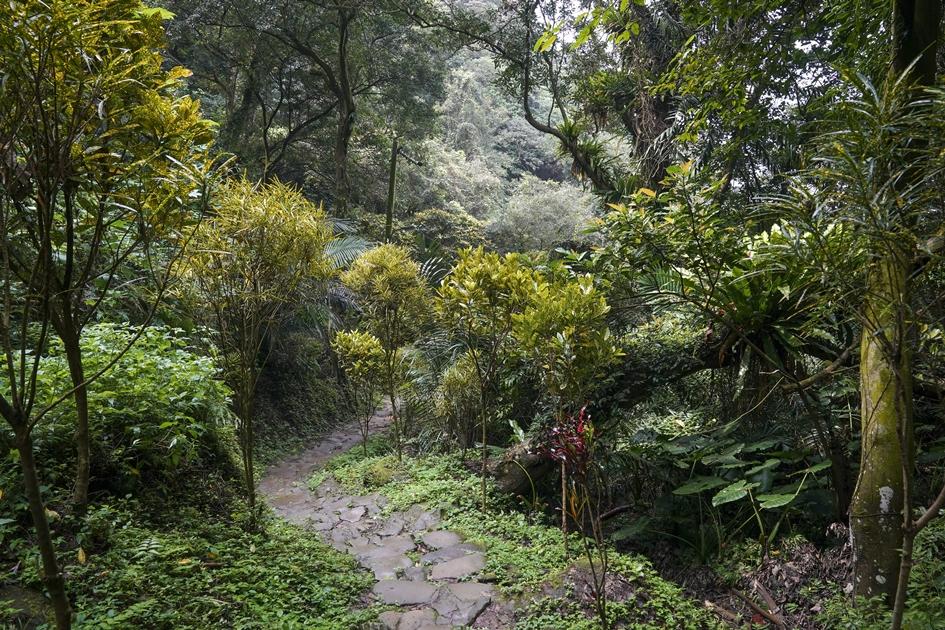 新北市的登山步道就像是條微笑曲線,讓郊山像家山一樣 , 隨時可親近山林深呼吸。( 圖.蔡暉宏 )