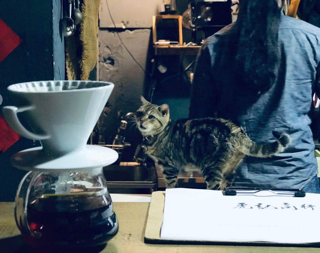 虎記商行只賣,不提供Wifi,也不能抱貓喔。 (圖.Sid攝)