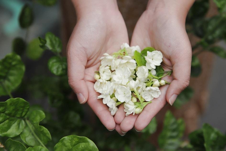 小小一朵茉莉花在民國50年代為花壇鄉創造高經濟價值。( 圖.妮可魯 )